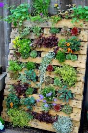 Vertical Garden Vegetables by Best 10 Pallet Garden Walls Ideas On Pinterest Herb Garden
