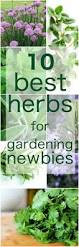 10 easy to grow herbs for a simple kitchen herb garden herbs