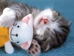 Cute Kitten \u0026middot; cute bunny. Snuggle cozy love. - too-cute-kitten