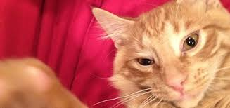 Bad Online Dating Pics     From Cats   Catster