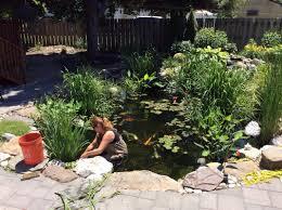 koi pond maintenance keep your pond live and healthy hirerush blog
