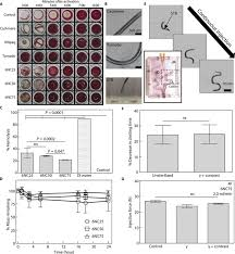 an injectable shear thinning biomaterial for endovascular