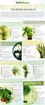 Office Desk Plants by Desk Plant Air Purifier Best Home Furniture Decoration