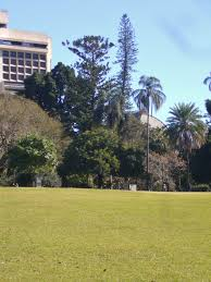 Brisbane City Botanic Gardens by National Trust Cook Pine Araucaria Columnaris
