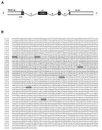 Actinomycin write me an essay online   helalinden com Helalinden com