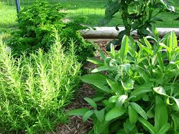 garden design garden design with herb garden design for small