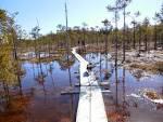 Kuvahaun tulos haulle suo pitkospuut