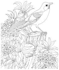 100 shamrock coloring page color flower coloring pages flower