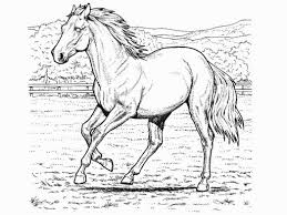 horse coloring pictures 528334 coloring pages for free 2015
