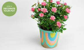 Flowers Plants by How To Repot A Plant 7 Simple Steps With Pictures Proflowers