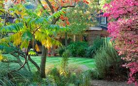 trees small gardens telegraph