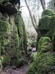 Tribute to Tolkien: Magical Mystical Mossy-Green Muse for Middle ... lovethesepics.com