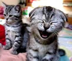 Кошкам на смех