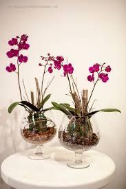 Flowers Plants by Unique Flowers Nj Florists Hoboker Florist