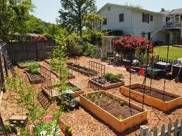 companion vegetable garden layout best vegetable garden layout gardening ideas