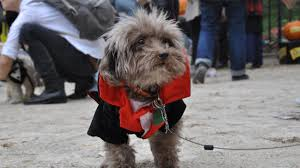halloween parade background how to have a happy and safe halloween for your pet unity