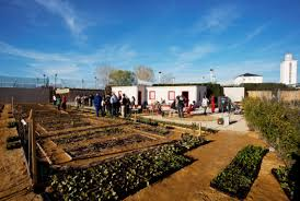 Tu propio huerto ecológico en Madrid: Huertos urbanos inundan la capital