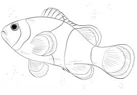 clownfish coloring pages free coloring pages