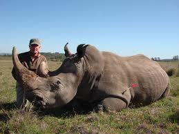 Greenhunting Rhino Pic