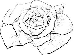 coloring pages rose virtren com