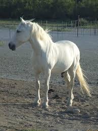 les chevaux.. - Page 14 Images?q=tbn:ANd9GcRWBTgx9aT_LppFj544IoLI7ORRBCPBEIKC5ABcjz_ZNO3tSZ1UQmbMMHU