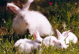Curiosidades de los gatos, perros y conejos