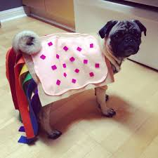 nyan pug roxy u0027s handmade halloween costume lolz