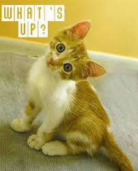 Cute Animals Cat Whats Up Comment Graphic: Picture, Image