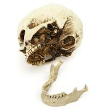 small halloween gifts aliexpress com buy new halloween props small human skull replica