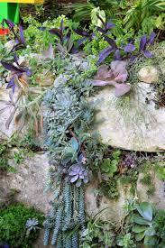 Succulents Pots For Sale by Rock Oak Deer Succulents On The Rocks For A Lush Vertical Garden
