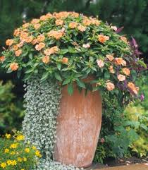 21 best container recipes images on pinterest flower gardening