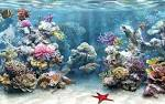 Wallpapers Backgrounds - Amazing Background HD Aquarium Wallpapers