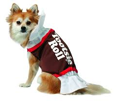 15 last minute costume ideas for your pet all under 20