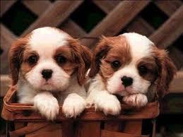 >>>Top 10<<< โรคที่สุนัข & แมวเป็นได้แต่คนไม่รู้ Images?q=tbn:ANd9GcRXa69woRD-ysF6elLirJ59heinytvjT3Uv1-H3Giw093veD8uk
