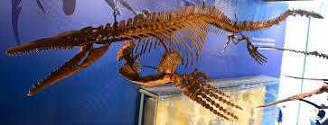Plotosaurus