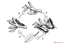 100 life cycle coloring pages science color sheets free