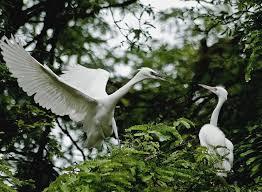 Sanctuaire des oiseaux Ngoc Hien, Ca Mau