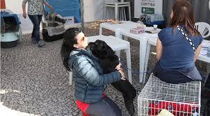 Castramóvel já atendeu quase 2 mil animais em Curitiba (PR ...