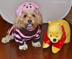 Winnie Pooh Dog Halloween Costume Save Money Halloween Purpose Costume
