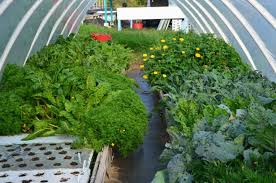 Starting Your Backyard Aquaponics System - Backyard aquaponics system design