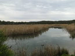 Anglesea River