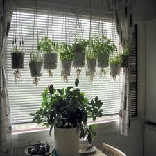 joyous herb garden slcgreen blog along with herbs in indoor herb