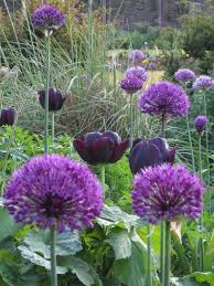 best 25 dark purple flowers ideas on pinterest dark purple