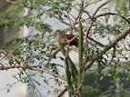 นกบ้านๆ | กลุ่มอนุรักษ์ความหลากหลายทางชีวภาพและสิ่งแวดล้อม