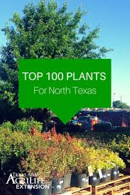 best 25 texas landscaping ideas on pinterest texas gardens