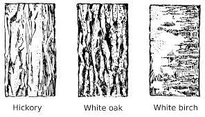 White Oak Bark File Tree Bark Psf Png Wikimedia Commons
