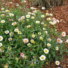 coastal gardening groundcover plants for the sea coast north
