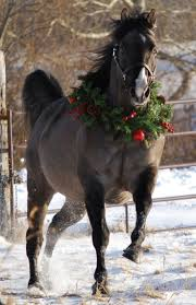 thanksgiving horse pictures 226 best christmas on the farm images on pinterest country