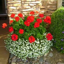 best 25 container plants ideas on pinterest container flowers