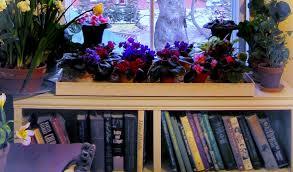 creating a window garden with plant shelves u0026 brackets